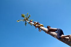 Nicht identifizierte Kinder des kletternden Kokosnussbaums Seezigeuner Bajau-Stammes stockfotografie