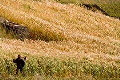 Nicht identifizierter einheimischer Landwirt, der in arbeitet Stockfoto