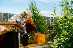Nicht identifizierter Imker, der Bienenwabe mit Bienen hält, um Si zu steuern Stockbild
