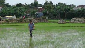 Nicht identifizierter vietnamesischer Landwirt, der mit Schädlingsbekämpfungsmitteln auf Reisfeld sprüht stock video
