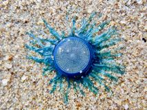 Nicht identifiziertes blaues Geschöpf im sandigen Strand Lizenzfreies Stockbild