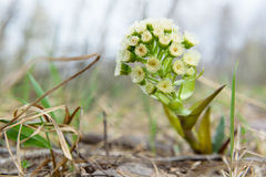 Nicht pflanzt eine Üblicheblume Zsolt-Schönheit der Natur Lizenzfreie Stockbilder