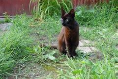 Nicht reinrassige Katze im Yard Lizenzfreies Stockfoto