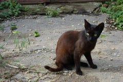 Nicht reinrassige Katze im Yard Lizenzfreie Stockbilder