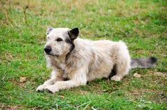 Nicht reinrassiger Hund Lizenzfreies Stockbild