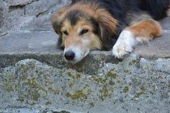 Nicht reinrassiger Hund Stockfotografie