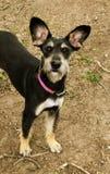 Nicht reinrassiger Hund von Dogshelter lizenzfreies stockbild