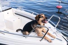 Nicht reinrassiges Kapitän zur See Stockbild