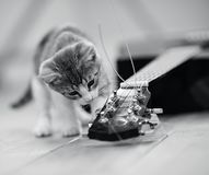 Nicht spielt das Farbbild eines Kätzchens mit einer Gitarrenschnur Stockbild