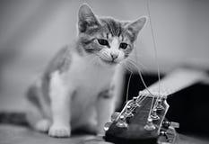 Nicht spielt das Farbbild eines Kätzchens mit einer Gitarrenschnur Lizenzfreies Stockfoto