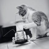 Nicht spielt das Farbbild eines Kätzchens mit einer Gitarrenschnur Stockfotografie