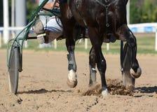 nicielnica wyścigi konny Konia kłusaka traken w ruchu na hipodromu zdjęcia royalty free