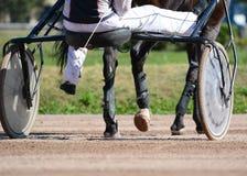 nicielnica wyścigi konny Konia kłusaka traken w ruchu na hipodromu obrazy royalty free