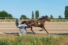 Nicielnicy Ścigać się na Karlshorst torze wyścigów konnych obrazy stock