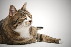 Nickerchen machende Katze lizenzfreies stockbild