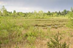 The Nicklheim upland moor, Germany Royalty Free Stock Photos