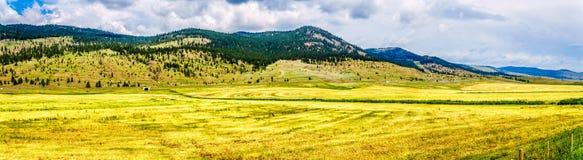 Nicola谷的大农场土地在不列颠哥伦比亚省,加拿大 库存照片