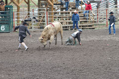 Nicola Valley Rodeo Royalty Free Stock Image