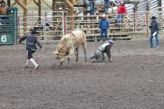 Nicola Valley Rodeo. MERRITT; B.C. CANADA - MAY 15: Bull Riding event at Nicola Valley Rodeo May 15; 2011 in Merritt British Columbia; Canada Royalty Free Stock Image