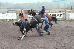 Nicola Valley Rodeo Royalty Free Stock Photography