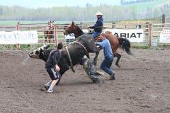 Nicola Valley Rodeo. MERRITT; B.C. CANADA - MAY 15: Bull Riding event at Nicola Valley Rodeo May 15; 2011 in Merritt British Columbia; Canada Royalty Free Stock Photography