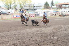Nicola Valley Rodeo Stock Photography