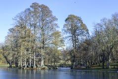 Nicolae Romanescu公园 免版税图库摄影