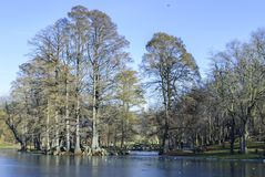 Nicolae Romanescu Park Royalty-vrije Stock Fotografie