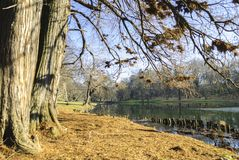 Nicolae Romanescu Park Immagine Stock