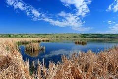 Nicolle Marsh in Qu 'appelle River Valley, Büffel-Pfund-provinzieller Park, Saskatchewan stockbild