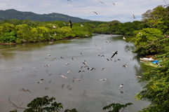 Nicoya半岛风景,哥斯达黎加 库存照片