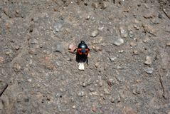 Nicrophorus vespilloides burying beetle or sexton beetle young specimen on asphalt background. Top view stock images