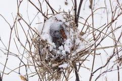 Nid abandonné dans la forêt d'hiver Photographie stock