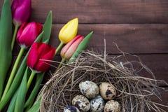 Nid avec des oeufs et des tulipes d'oiseau Photographie stock
