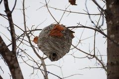 Nid d'abeille dans un arbre Photos libres de droits