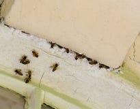Nid d'abeille de miel dans la vieille maçonnerie Image libre de droits