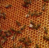 nid d'abeilles Photo stock