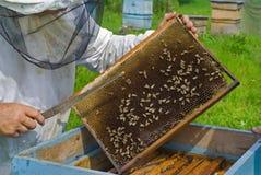 Nid d'abeilles 12 Images stock