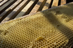 Nid d'abeilles Image stock