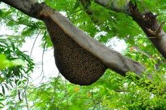 Nid d'abeilles Photographie stock libre de droits