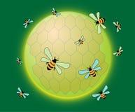 Nid d'abeilles arrondi Photographie stock