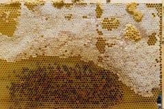 Nid d'abeilles avec du miel Photographie stock