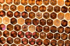 Nid d'abeilles avec du miel doux Image stock