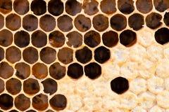 Nid d'abeilles avec du miel doux Images libres de droits