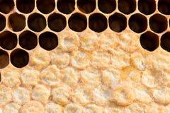 Nid d'abeilles avec du miel doux Image libre de droits