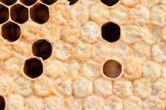 Nid d'abeilles avec du miel doux Images stock