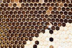 Nid d'abeilles avec du miel doux Photographie stock