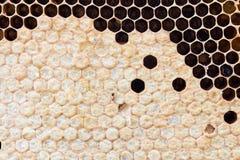 Nid d'abeilles avec du miel doux Photos stock