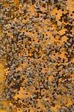 Nid d'abeilles avec le fond d'abeilles Photo libre de droits