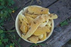 Nid d'abeilles avec les abeilles et le miel Apiculteur sur le rucher Photos libres de droits
